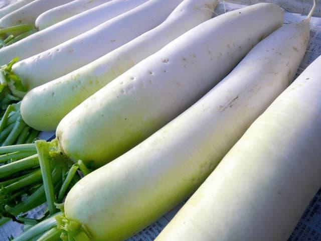 冬の野菜イメージ